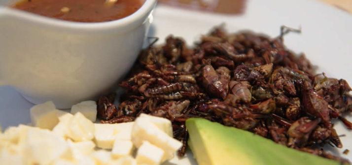 Tacos de chapulines