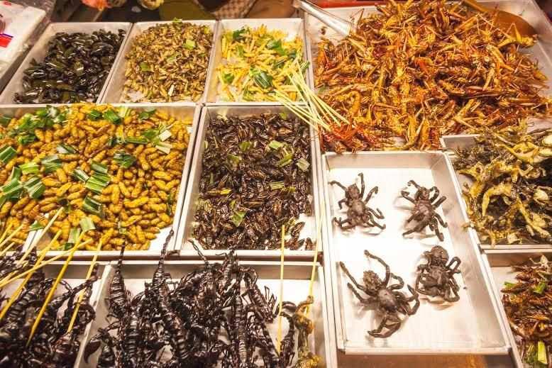 Plato de insectos como alimento